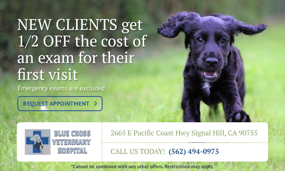 blue-cross-vet-new-clients