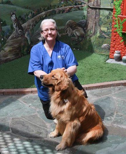 Signal Hill Animal Hospital Long Beach Ca