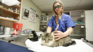 PHOTO IMAGES-Blue Cross Veterinary Hospital CA (163 of 251) (Copy)