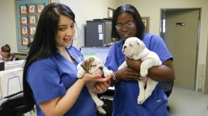 PHOTO IMAGES-Blue Cross Veterinary Hospital CA (99 of 251) (Copy)