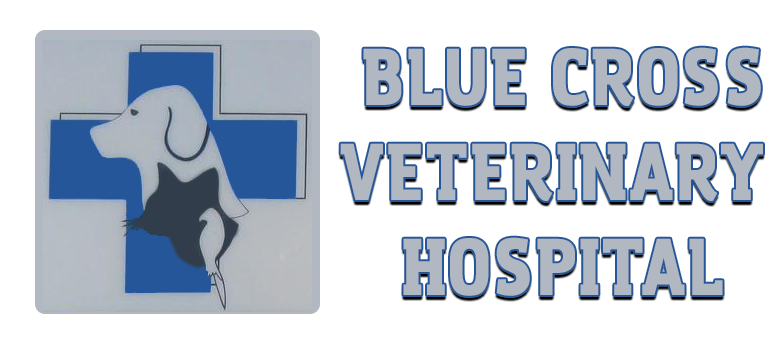 Blue Cross Veterinary Hospital