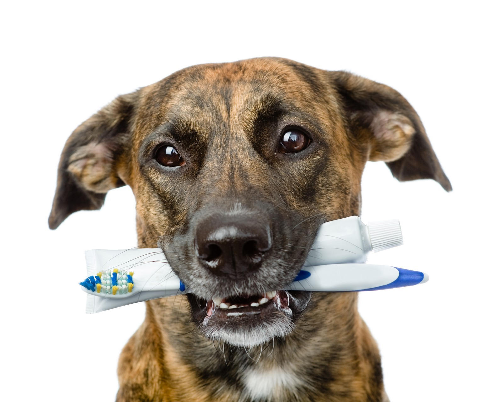 Best Food For Dogs With Dental Problems